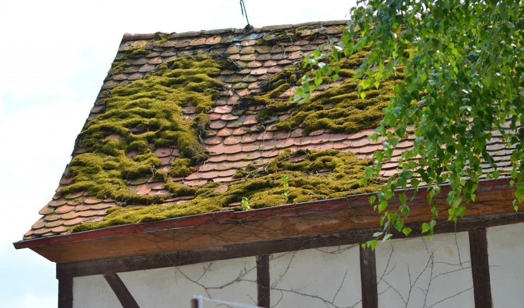 Wordless Wednesday: Budingen, Germany