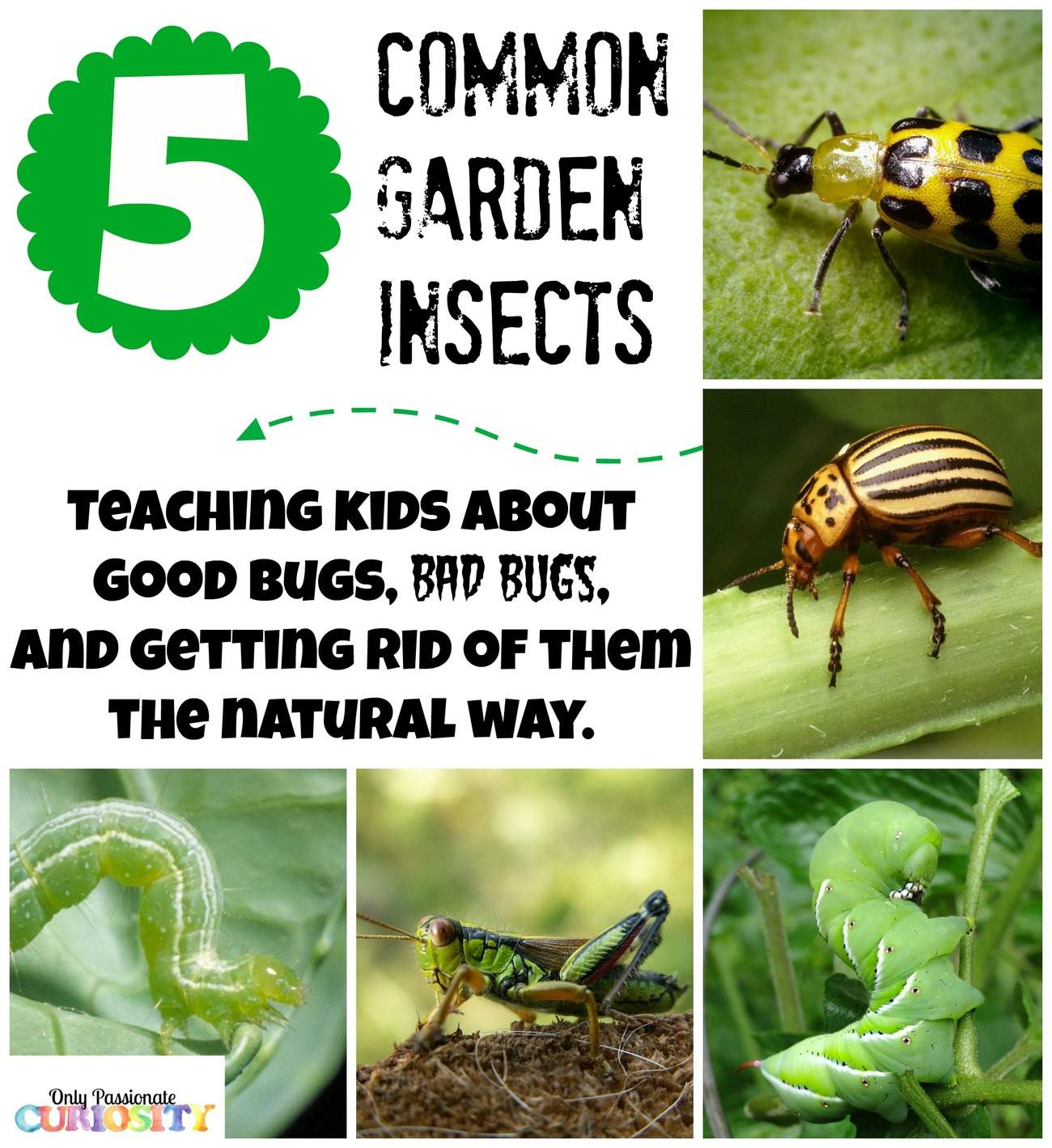 teaching children about garden bugs and natural pesticide recipes