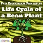 Plant Life Cycles {Free Printable}