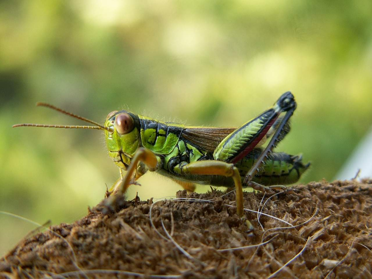 Teaching Children about Garden Bugs {and natural pesticide recipes}