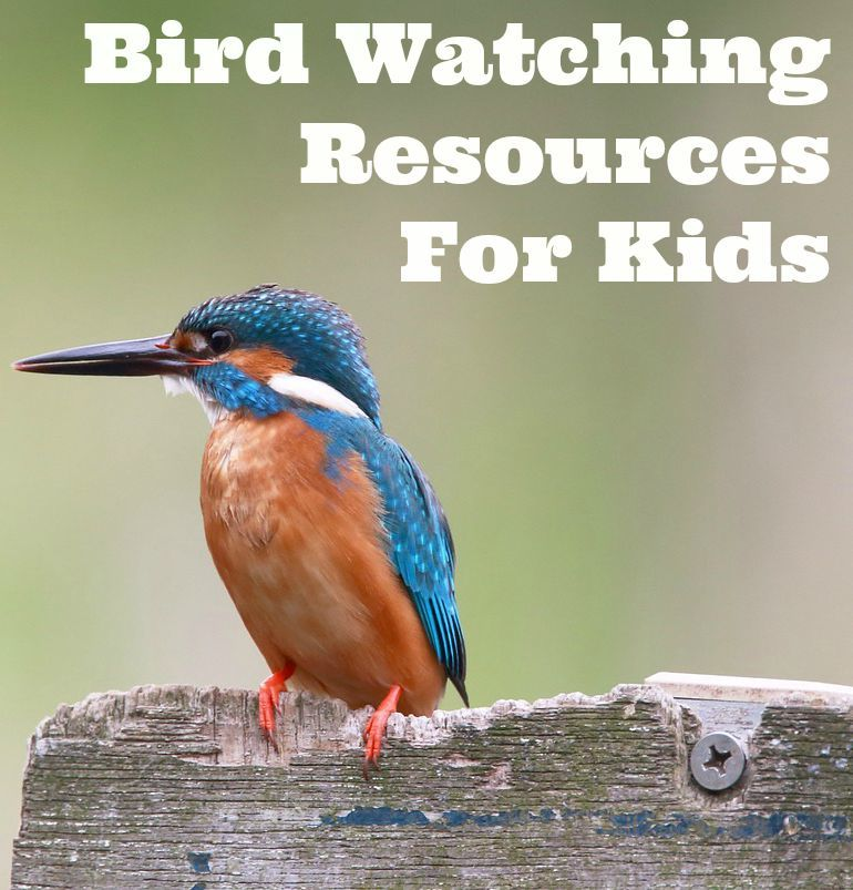 Population Ecology for Kids {Birdwatching Activity}