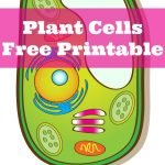 Learning About Plant Cells {Free Printable}