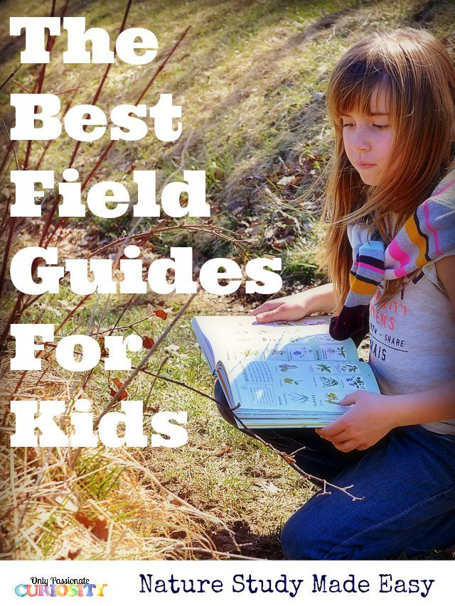 The Best Field Guides for Kids