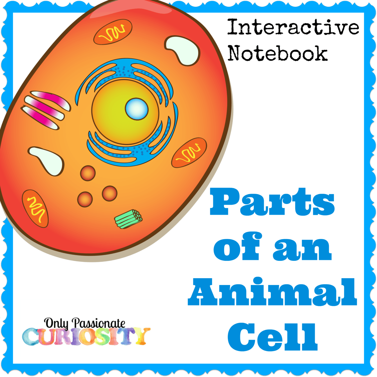 Animal Cell Interactive Notebook – Only Passionate Curiosity