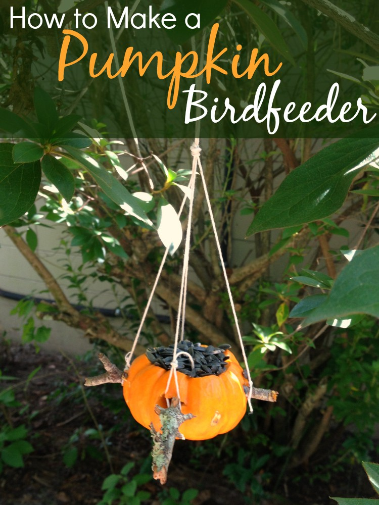 How to Make a Pumpkin Birdfeeder