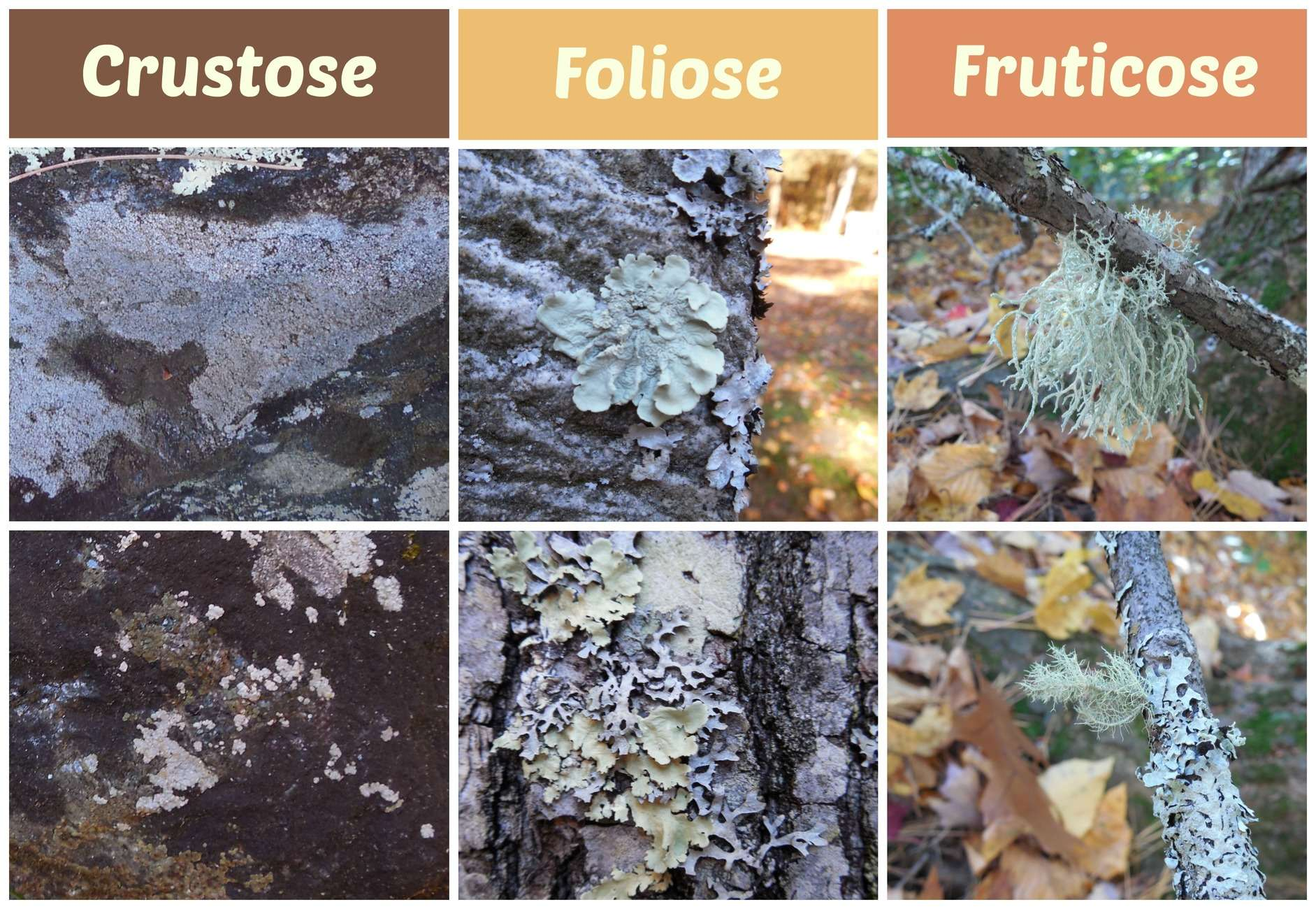 Liking Lichen: A Nature Scavenger Hunt