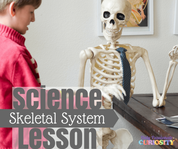Learning about the Skeletal System
