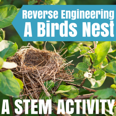 Reverse Engineering a Bird's Nest