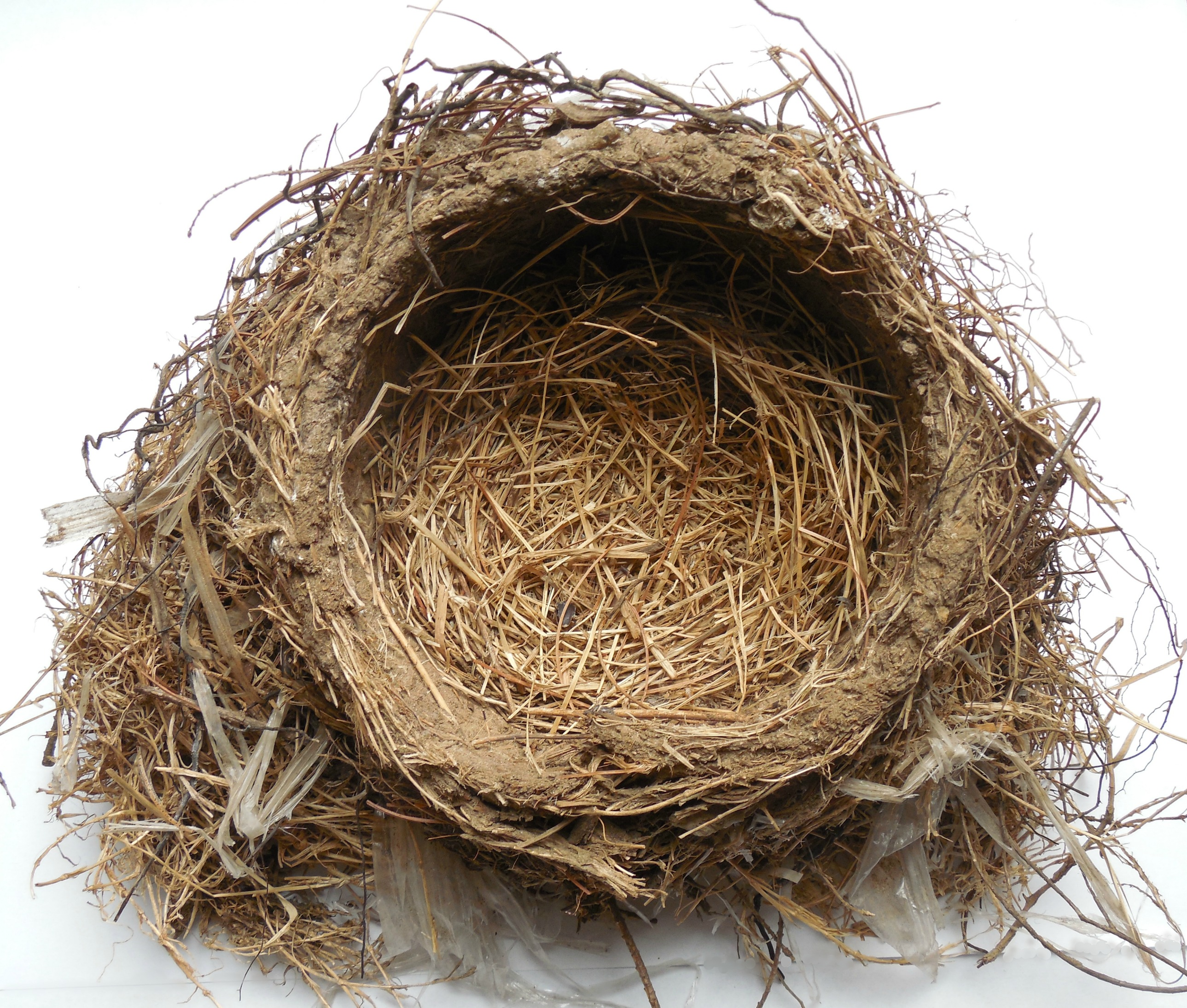 Drawing printout how to draw a bird nest - If Your Kids And Students Love To Draw In Nature They Ll Also Love This Template For Sketching Bird Feathers Too