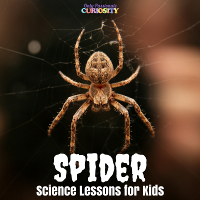 The Not-So-Spooky Science of Spiders