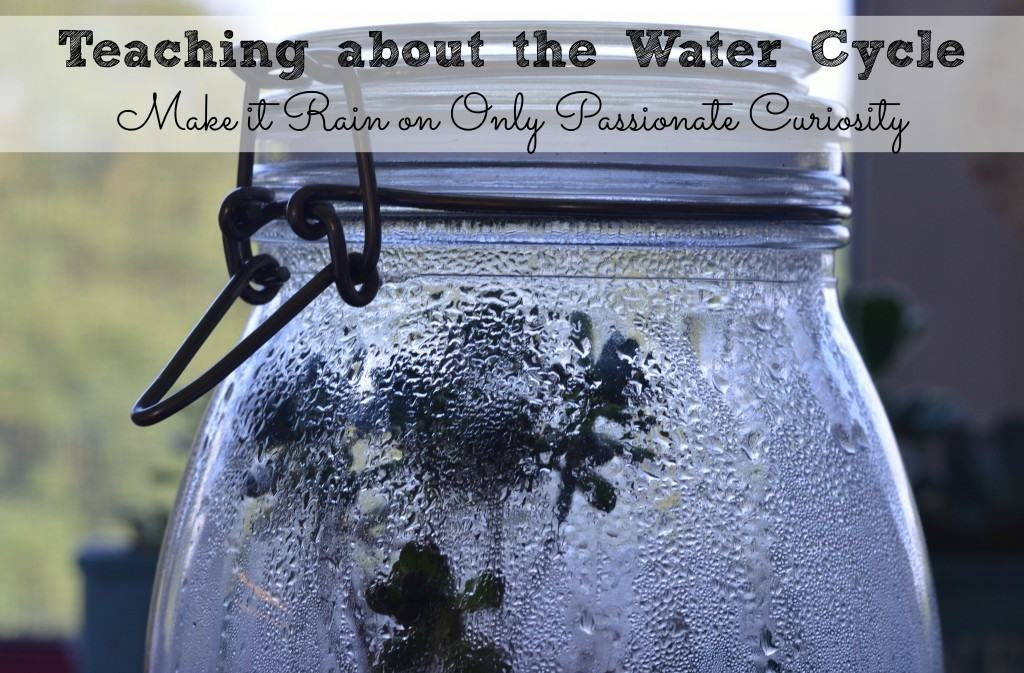 Learn About The Water Cycle Make A Terrarium