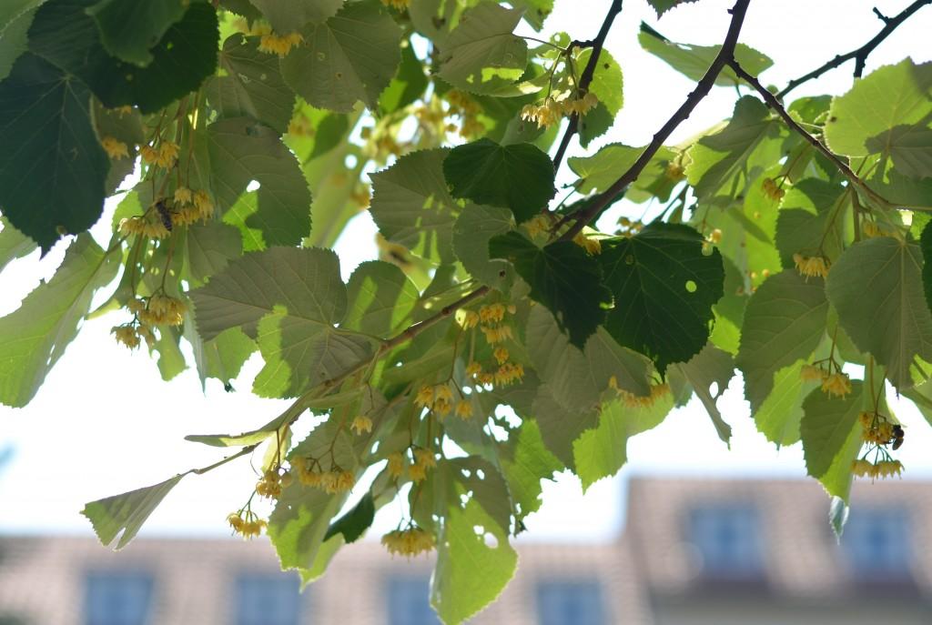 Tree 1 (3)