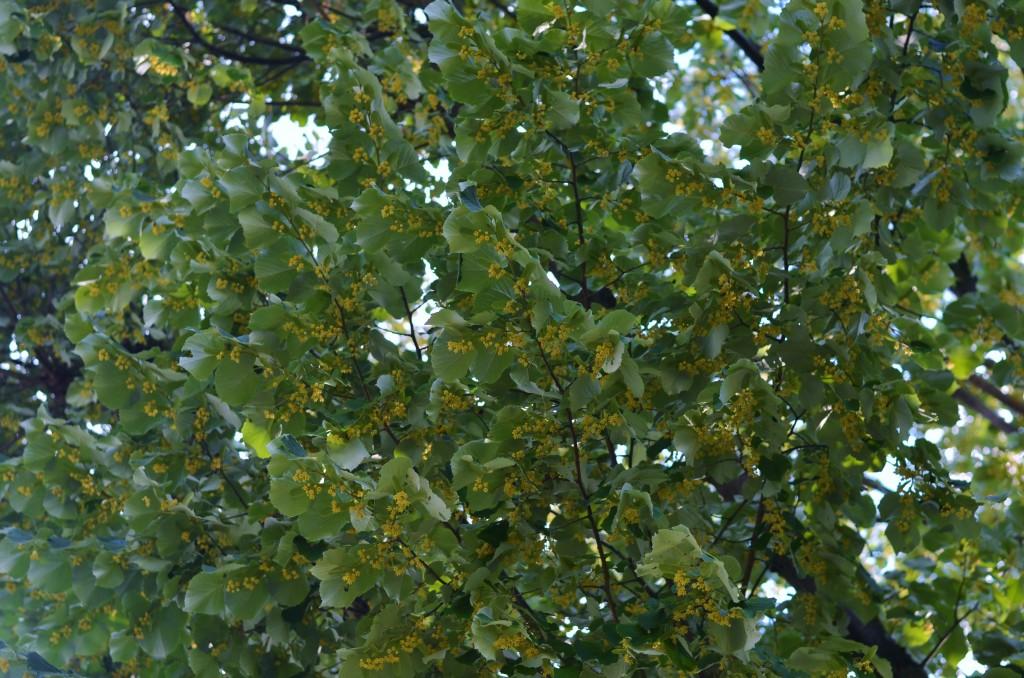 Tree 1 (4)