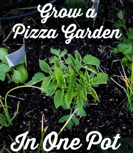 One Pot Pizza Garden
