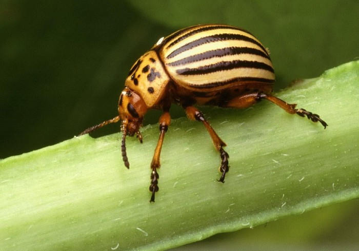 insect-387179_1280