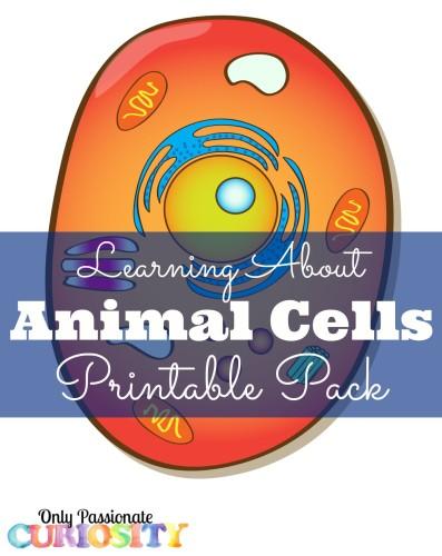 Animal Cells Printable Pack