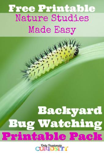 Bug Printable Pack