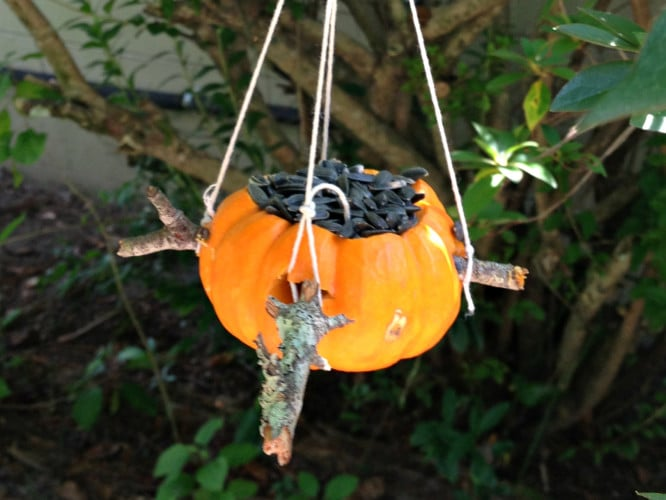 Another way to hang your pumpkin feeder