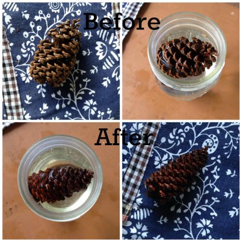 pinecone.1