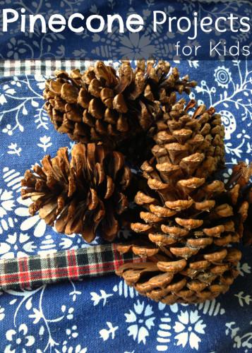 pinecone.cover