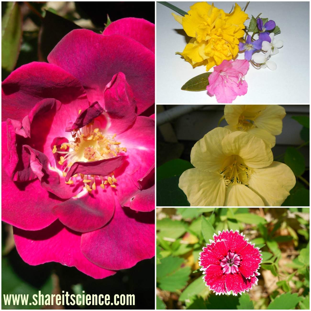 shareitscience_diversity-in-flowers (1)
