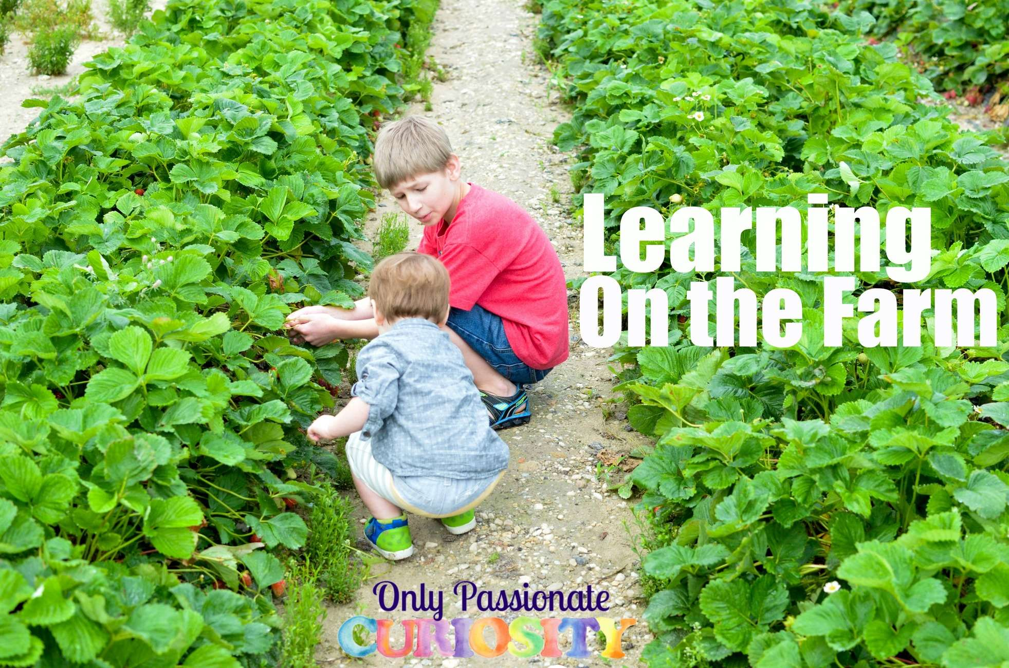Learning on the Farm {Nature Study}