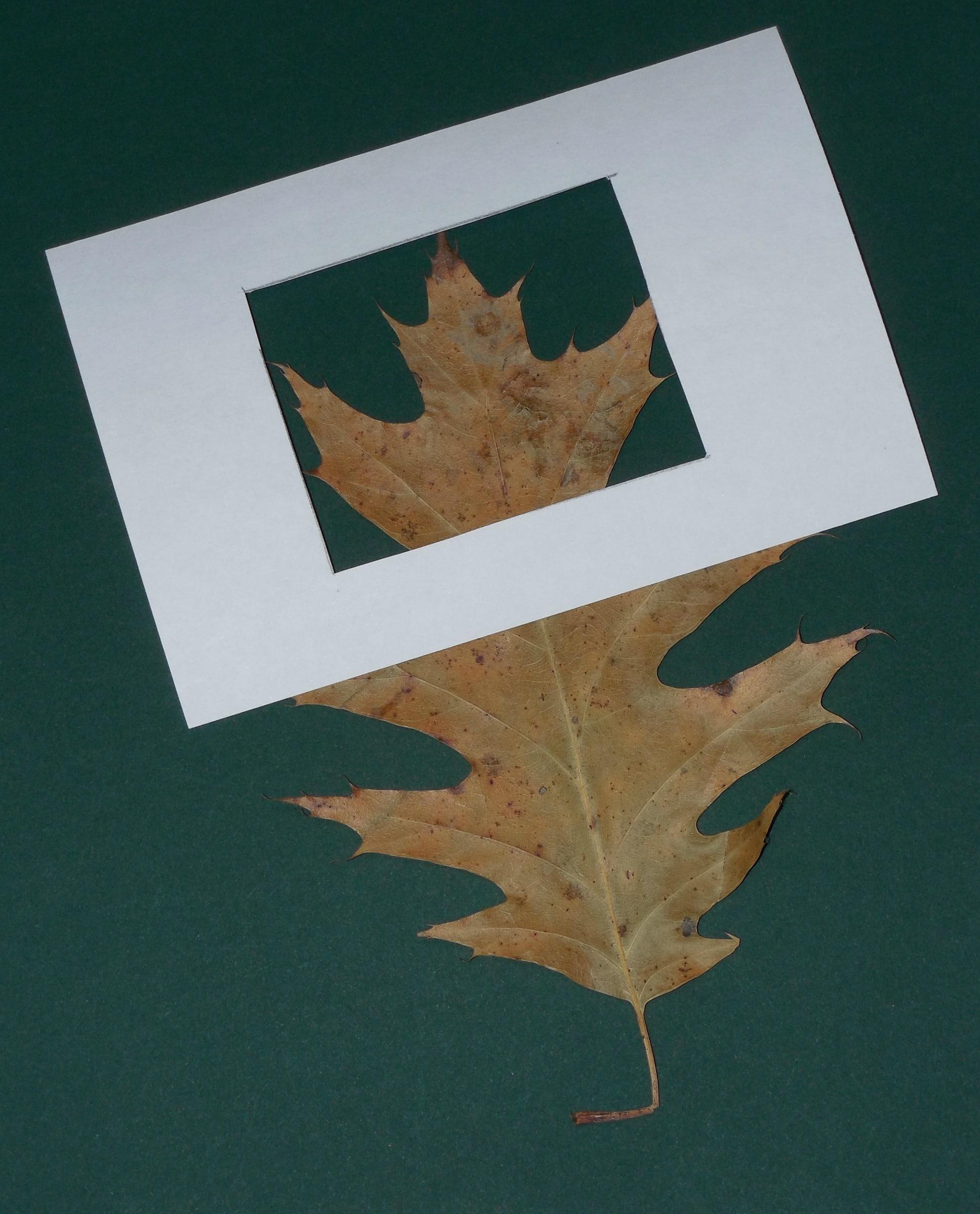 leaf-in-frame
