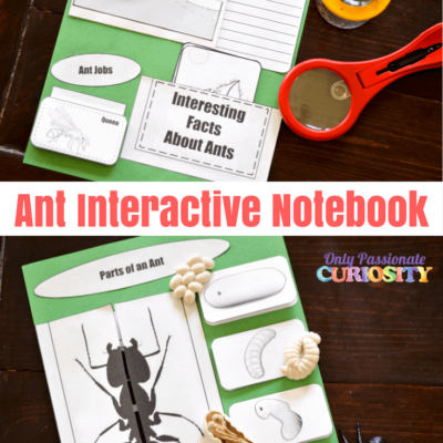 Investigating Ants
