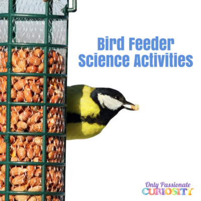 10 Easy Bird Feeder Science Activities