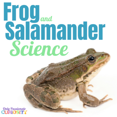 A Big Night: Frog and Salamander Science
