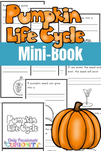 Pumpkin Life Cycle Mini-Book