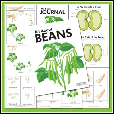 All About Beans–Life Cycle Unit Study