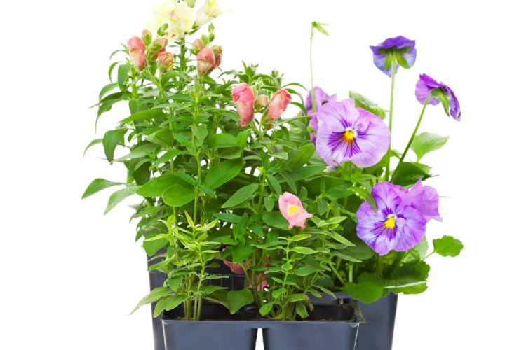 Discuss creating a unit study about flowers