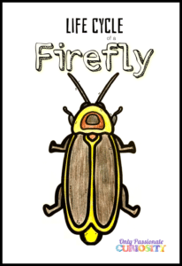 firefly colored in