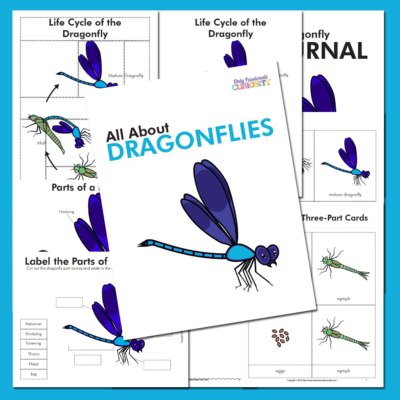 All About Dragonflies: Life Cycle Unit Study