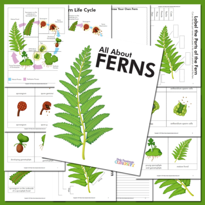 Life Cycle of a Fern Unit Study