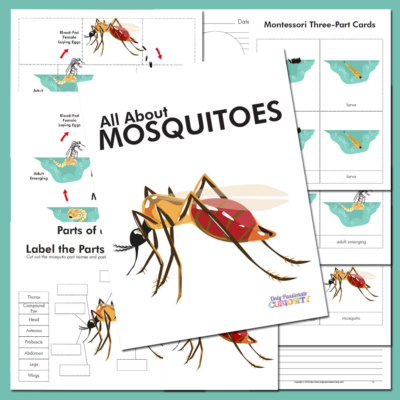 All About Mosquitoes-Life Cycle Unit Study