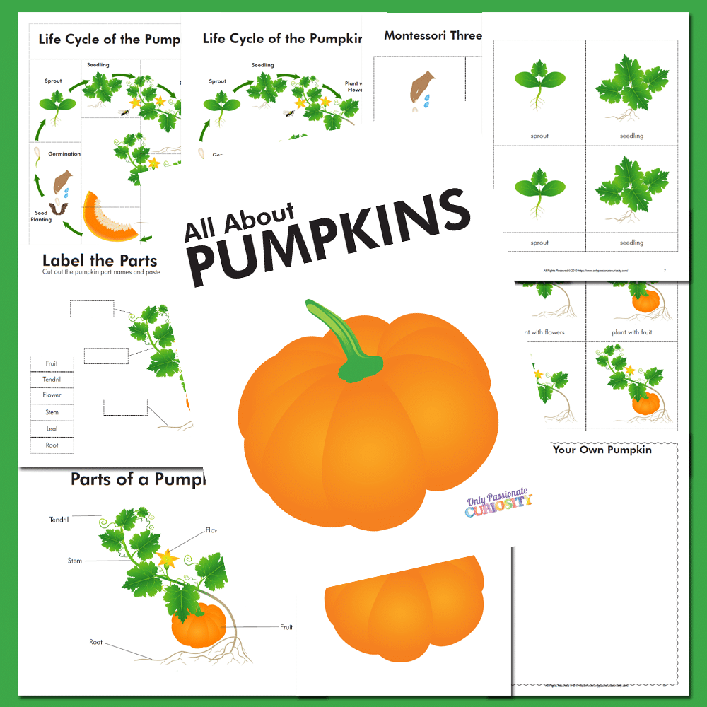 graphic regarding Life Cycle of a Pumpkin Printable named All Pertaining to Pumpkins: Daily life Cycle Product Examine - Merely Pionate